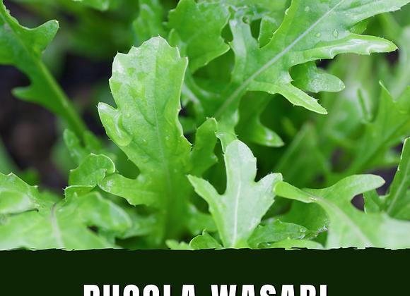 RUCOLA WASABI