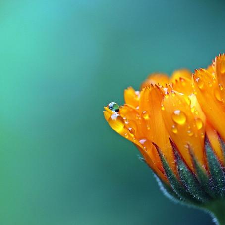 I fiori sanno quando sbocciare