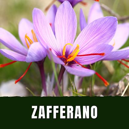 Zafferano [vaso 14]