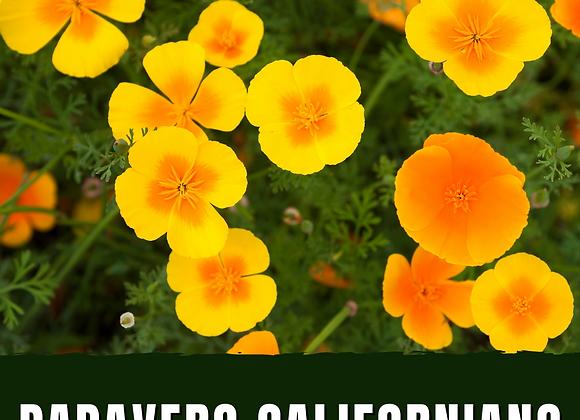 Papavero della California