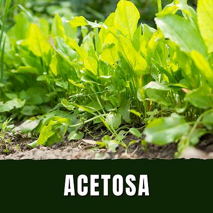 Acetosa ( Erba Brusca)
