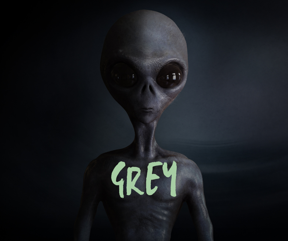 Die Greys