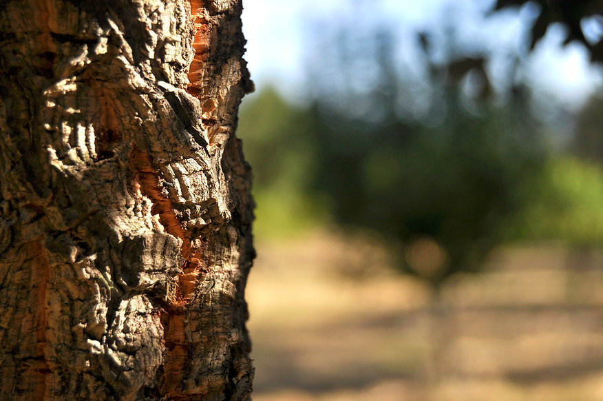 tree-4355574_1920.jpg