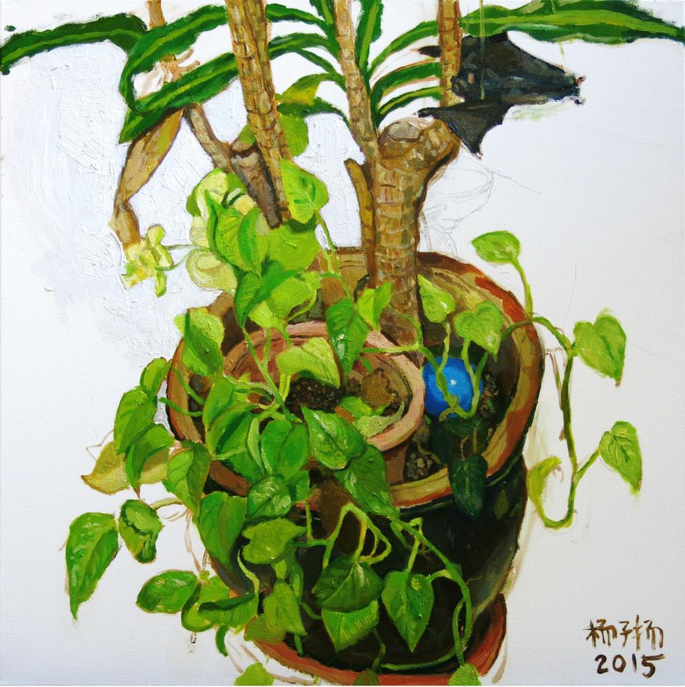 Money Plant, 2015, Oil on canvas, 61.2 x 61.2cm  Private Collection, Australia