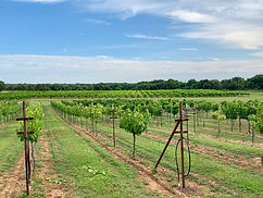 Vineyard and Winery Bend, Texas
