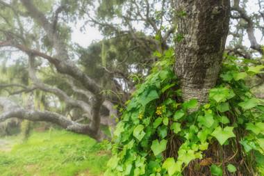 Los Osos California Oak Preserve