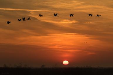 Sun Rise Merced Wildlife Refuge California