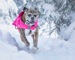 Your never too old to romp in the snow!