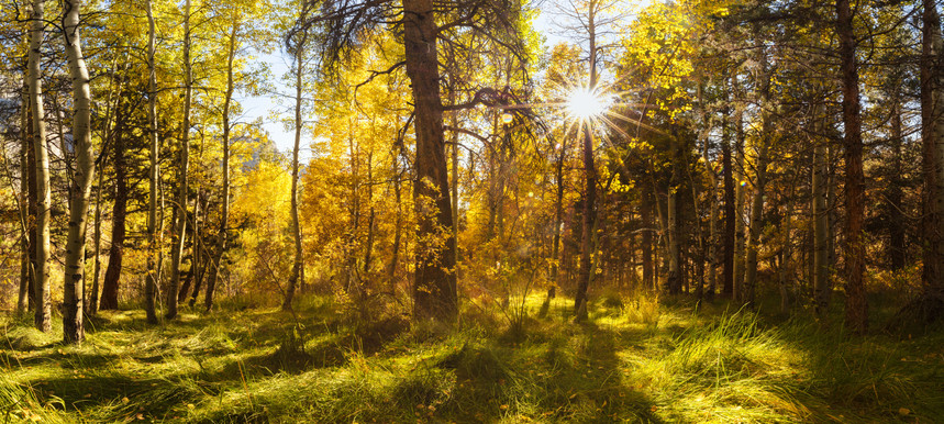 Afternoon Sun in the Eastern Sierras