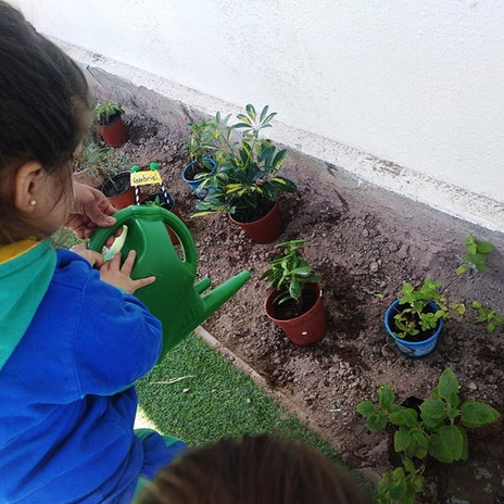Proyecto Huerta de los aromas 🌿🍃 Crean