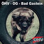 ÖHV-OG-BG Logo.jpg