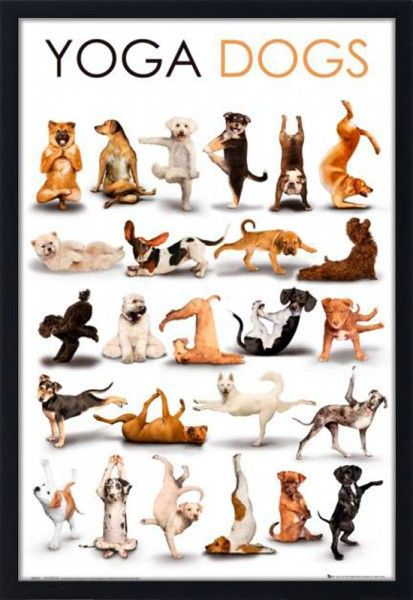 Dogs doing yoga poses