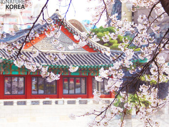 Spring Festivals You Shouldn't Miss in Korea