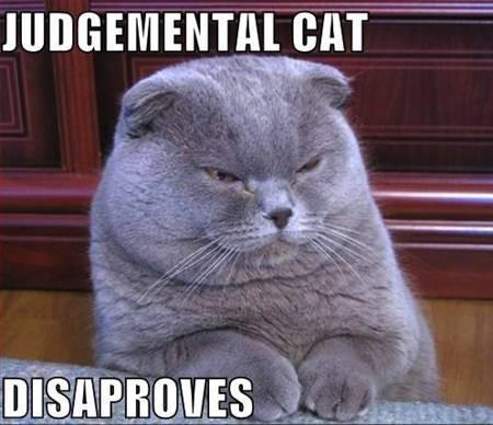 Judgemental Cat