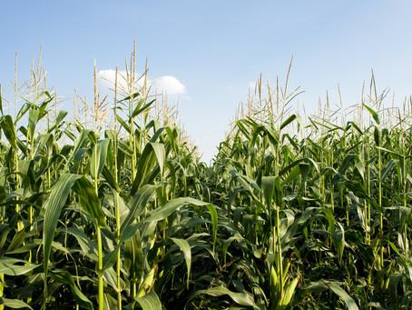 Biofuel vs Oil // Will Biofuel Stop Climate Change?