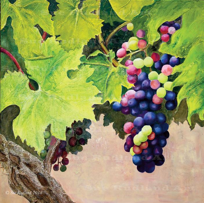 Beaujolais grapevine.jpg