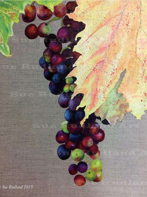 Ripening Vine