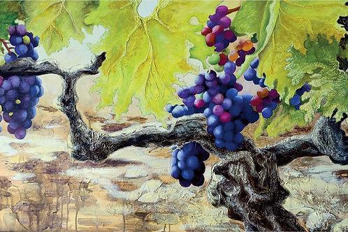 Beaujolais Grapevine Triptych