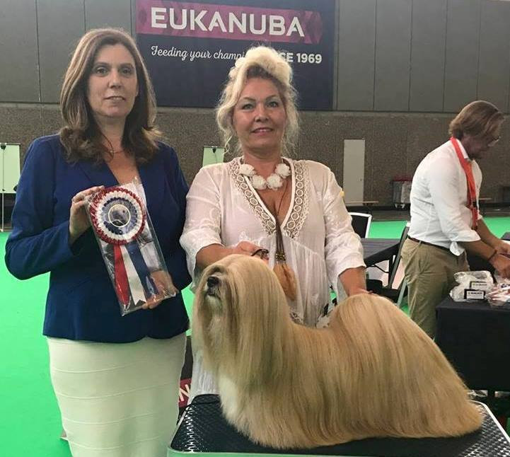 Lhasa Apso Close To Perfection Next To You
