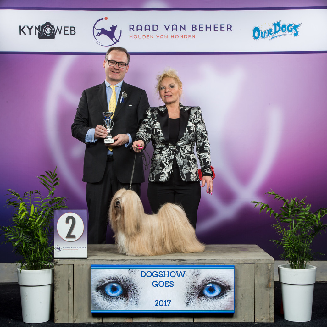 Lhasa Apso Close To Perfection Dogshow Goes