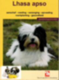 lhasa apso fokker lhasa apso pups