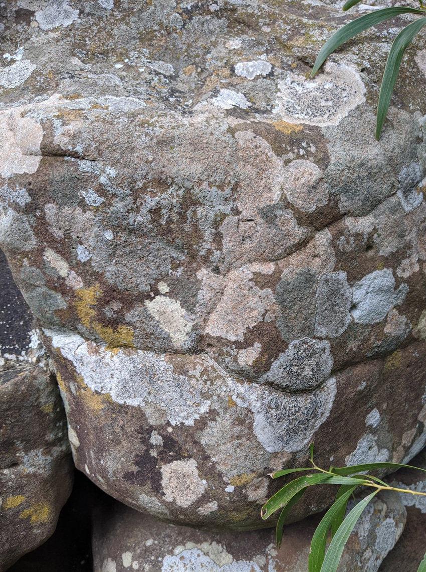 lichen pastello.jpg