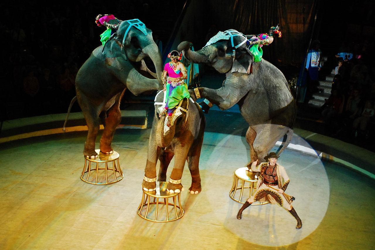 Ижевский цирк