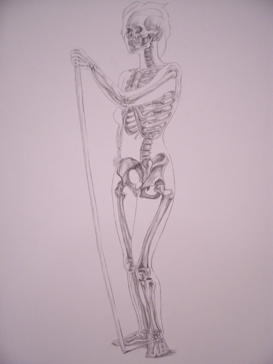 Anatomy 03