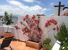 Roof terrace flowers.jpg
