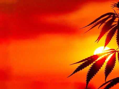 Can Cannabis help fight the Coronavirus?