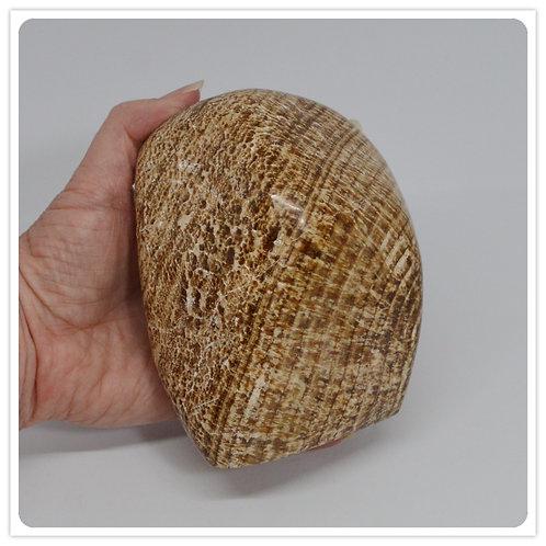 Aragonite Polished Slab