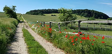 Weg zum Jasenberg