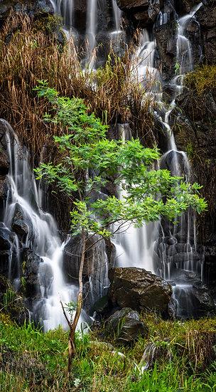 Peaceful Cascade