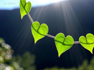 The Heart Chakra: A Bridge to Grace