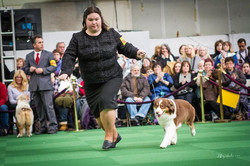 Cinnamon and I at Westminster 2014__Phot