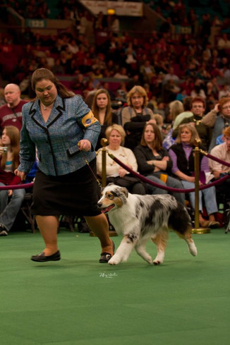 AKC CH. Copper Hill's Racin' 4 Headstron