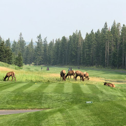 Obsticles at Fairmont Banff Springs Golf