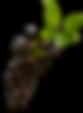 vectorstock_968372_clipped_rev_1.png