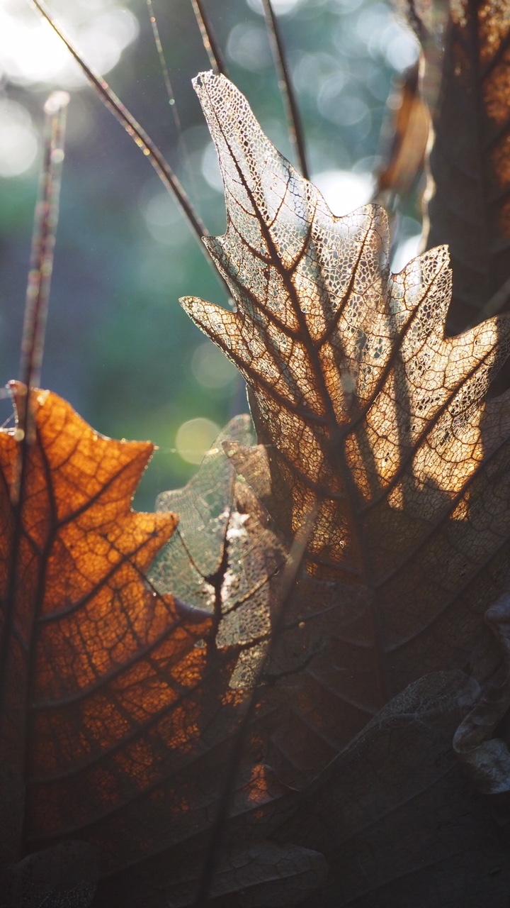 Leaf membranes