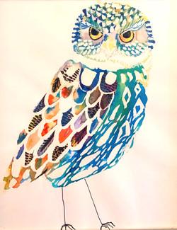 owl colour abs
