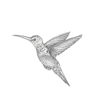 Kolibri_Frei.png