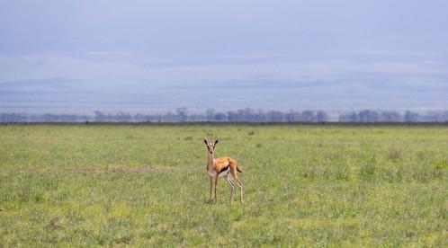 Amboseli, Kenya, December 2015