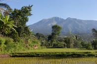 Tetebatu, North Lombok, Indonesia, August 2017