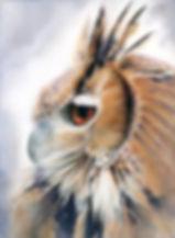 A Watchful EyeGAWA.jpg