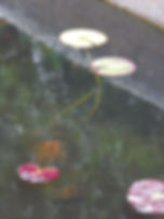 2 lillies.jpg