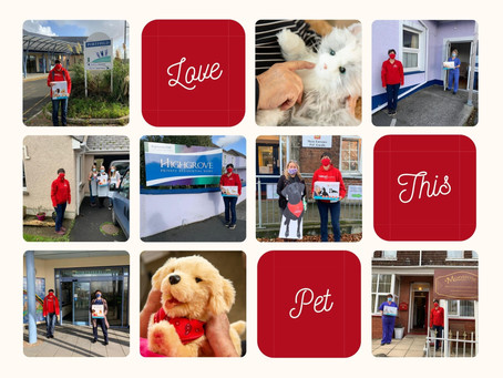 Haverfordwest Town Council grant leads to 5 robot pets being placed.