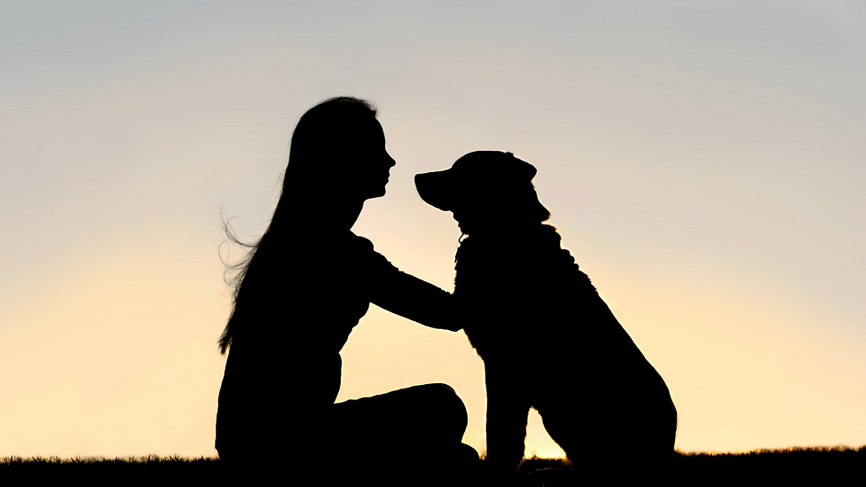 helping pets during hardship (13).png