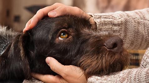 helping pets during hardship (4).png