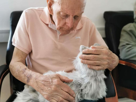 Western Telegraph write a story on our robot companion therapy pets