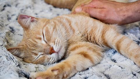 helping pets during hardship (5).png